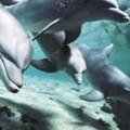 Дизайн Дельфины 5
